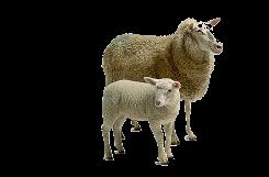 Sítě pro ovce a kozy