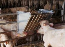 Jesle závěsné jednostranné pozinkované pro ovce 1m