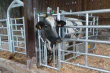 Výsuv panelu EX5, se samopoutací fixační zábranou pro veterinární a inseminační box