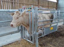 Samopoutací fixační zábrana pro veterinární a inseminační box