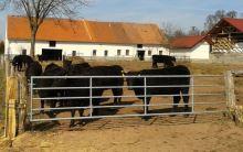 Pastvinová brána kovová 110 cm - nastavitelná